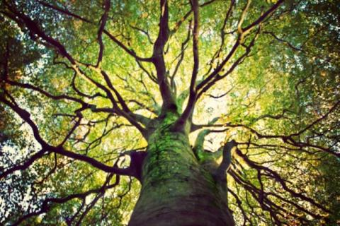 Just like humans rely on bacteria in and outside of our body to maintain our health, tree branches rely on natural fertilization by bacteria in their branches. (Photo : Getty Images)
