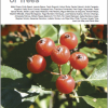 European Red List of Trees