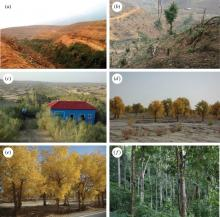 Different types of vegetation, which can all be classified as forest