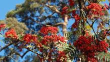tree with berries
