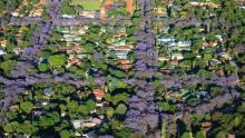 Johannesburg urban forest