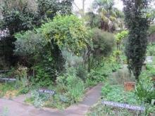 The Garden at the South London Botanical Institute in Tulse Hill